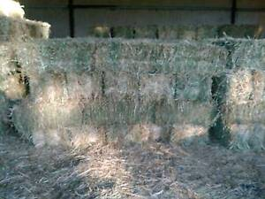 Small square  bales of rye grass hay Paxton Cessnock Area Preview