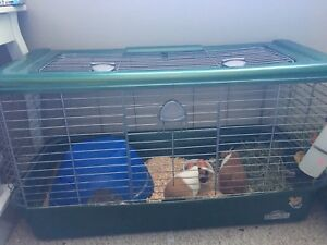 Guinea pig / bunny cage for sale!!
