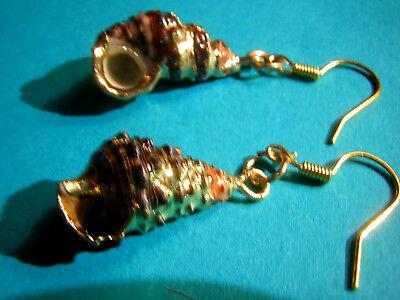 SCHNECKEN Ohrringe echte Schnecke braun Perlmutt mit Gold gefasst Abalone Paua