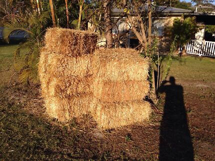 Hay bales for sale garden or decoration  Birkdale Redland Area Preview