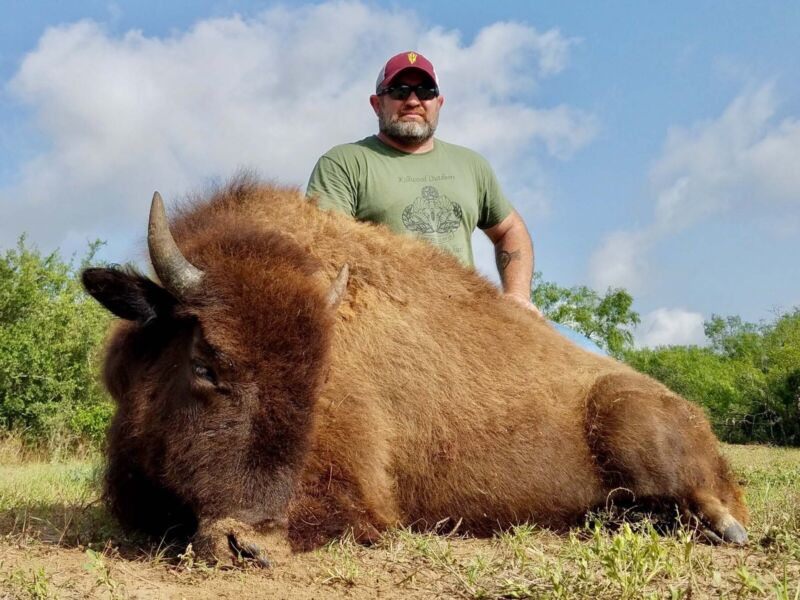 Super Discount Bison Buffalo Meat Hunt / South Texas / 2 Nights Lodging