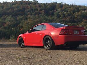 2003 Mustang Cobra SVT Torch Red #1851