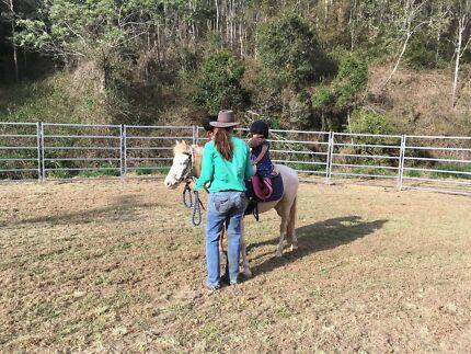 Lush Green Horse agistment