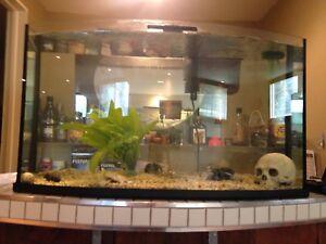 J'accueille vos poissons d'eau douce chez moi