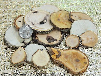 100 Wood slices 1 to 2.5 inch Rustic Weddings, Tree slices, Cookies, wood - Tree Cookies