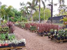 PLANT SALE. THURSDAY, FRIDAY & SATURDAY!!! Morayfield Caboolture Area Preview
