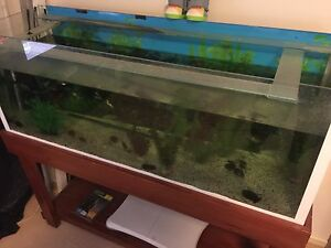 4 foot tank and stand Manly West Brisbane South East Preview