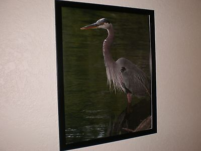 PHOTO ART by KATHY KAFKA Heron Bird 16x20 unframed print photography picture