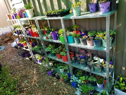 Wanted: Nursery pots wanted