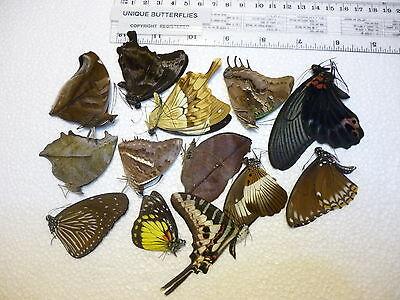 Some Unique Butterflies specimens