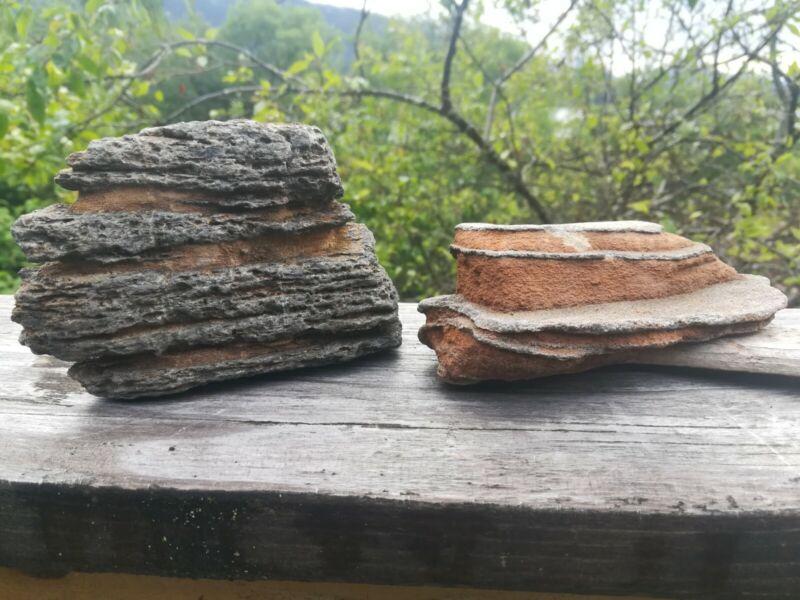 Fantastic Assortment Of Oddly Shaped Natural Beach Rocks Unusual Suiseki Display