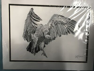 Pencil Drawing Vulture By Gary Tymon