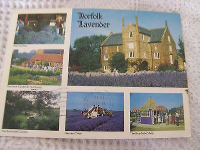 Postcard, Norfolk Lavender, 1987, Witley Press
