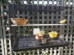 Canaries & Cage Bicheno Glamorgan Area Preview