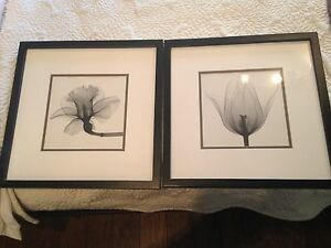 2 black and white floral pics