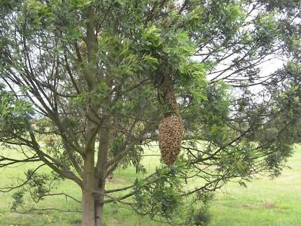 Rawfind Honey