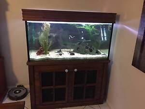 4x2x2ft Fish Tank Cashmere Pine Rivers Area Preview