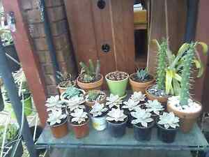 Huge plant sale!!! Succulents broms and more!!! Bidwill Blacktown Area Preview