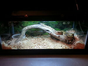 great boa and enclosure everything you need