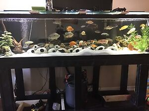 125 g tank stand home made