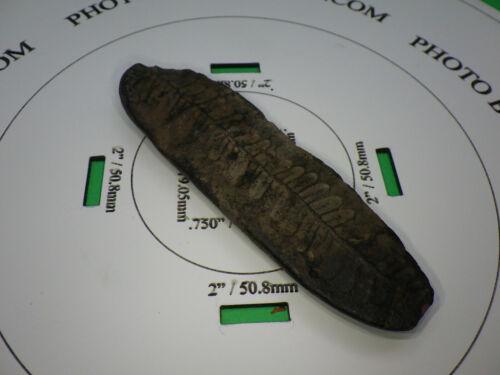 Plant Fossil 3.25x1 Inch 1.1oz