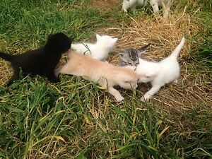 Kittens - Free to good home Echuca Campaspe Area Preview