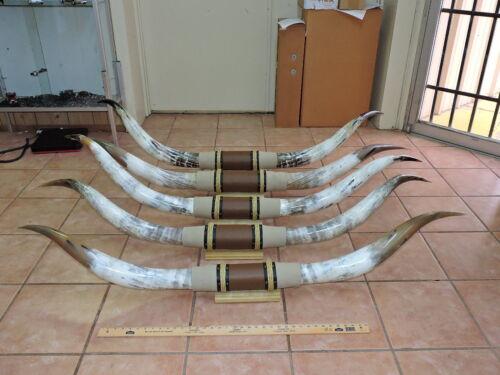MOUNTED STEER HORNS 5