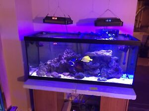 Saltwater tank complete system