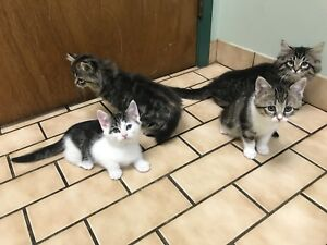 Rescued Farm kittens - ALREADY NEUTERED, VACC, CHIPPED, ETC.!