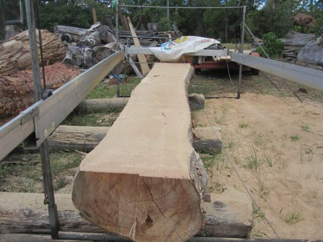 Slabs Timber Lemon Gum Seasoned Dry Sunshine Coast