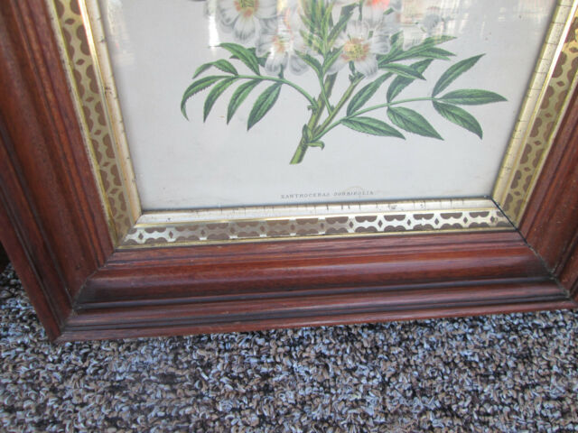 55607 Pair Antique Floral Botanical Prints in Walnut Victorian Frames