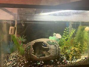 Fresh water fish & supplies