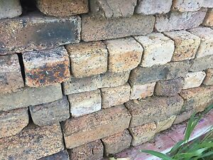 Rylance P 'Rolled' solid House Bricks (2300+) Kenmore Brisbane North West Preview