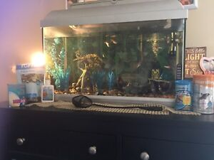 20+ gallon tank, all accessories, fish and tons more