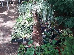 PLANT SALE-lots of variety Stafford Brisbane North West Preview