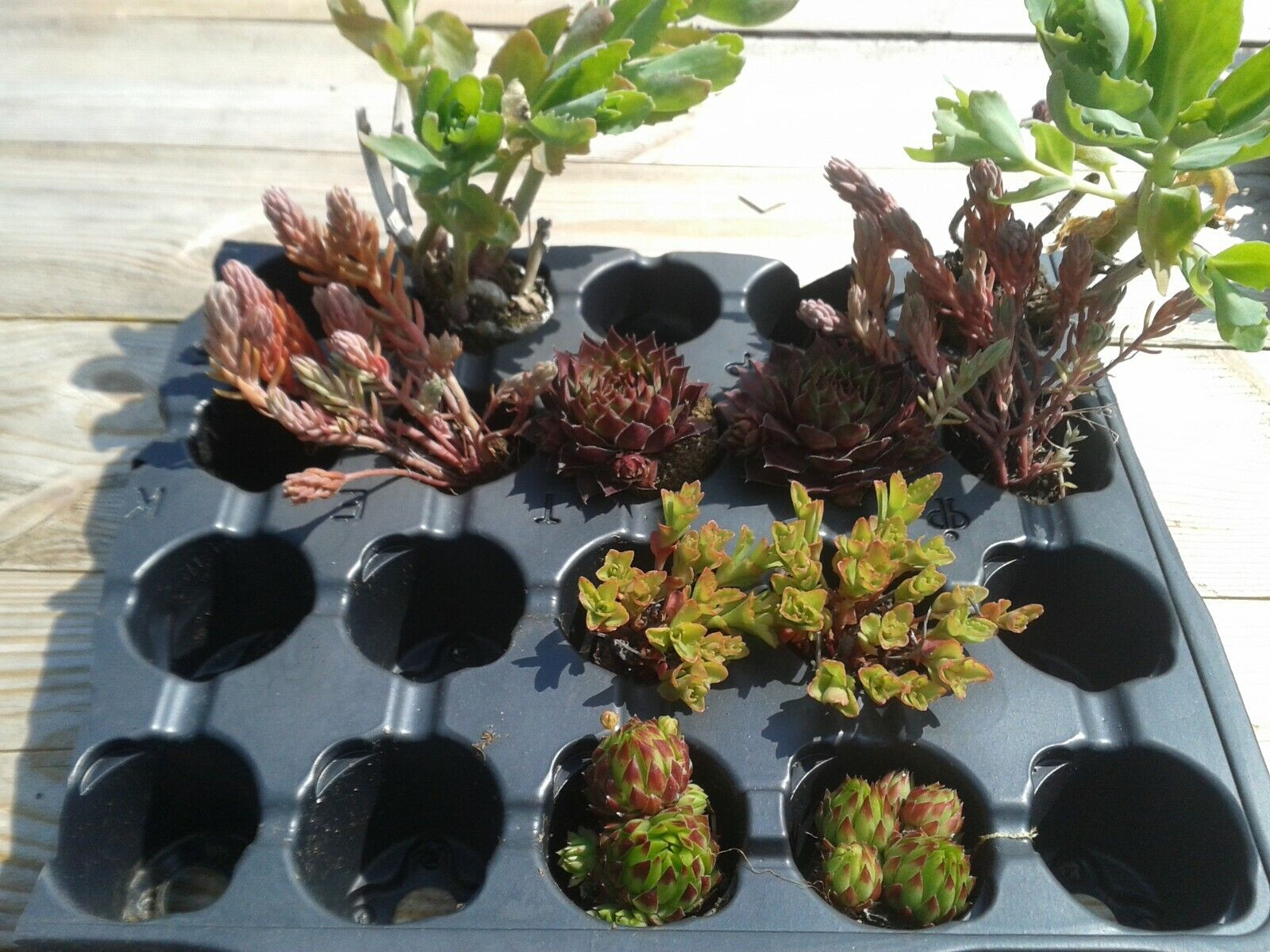 Dachbegrünung Sedumpflanzen Dachgrün Pflanzen Dachabdichtung Flachdach Carport