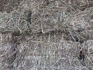 Good grass hay