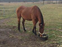 Armidale horse agistment Armidale Armidale City Preview