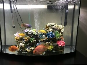 TWO 38 gallons tank(bowfront)with lid, lights, filter and heater