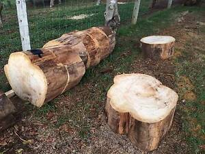 BLACK BUTT Rounds - Logs - Timber - Wood Alstonvale Ballina Area Preview