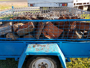 Firewood seasoned Redgum and yellow box $120 Grong Grong Narrandera Area Preview