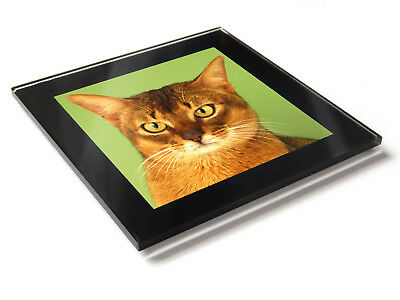 ABYSSINIAN Cat Kitten Premium Glass Table Coaster with Gift Box for sale  Shipping to Canada