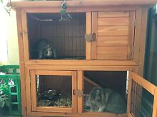 Two Female Dwarf Lop Eared Rabbits with Cage North Melbourne Melbourne City Preview
