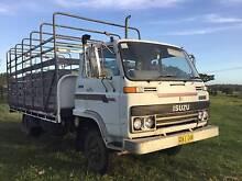 Isuzu Livestock Truck Kempsey Kempsey Area Preview