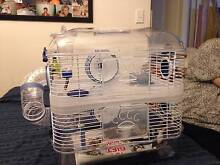 Pet mice, cute and adorable Sunnybank Hills Brisbane South West Preview
