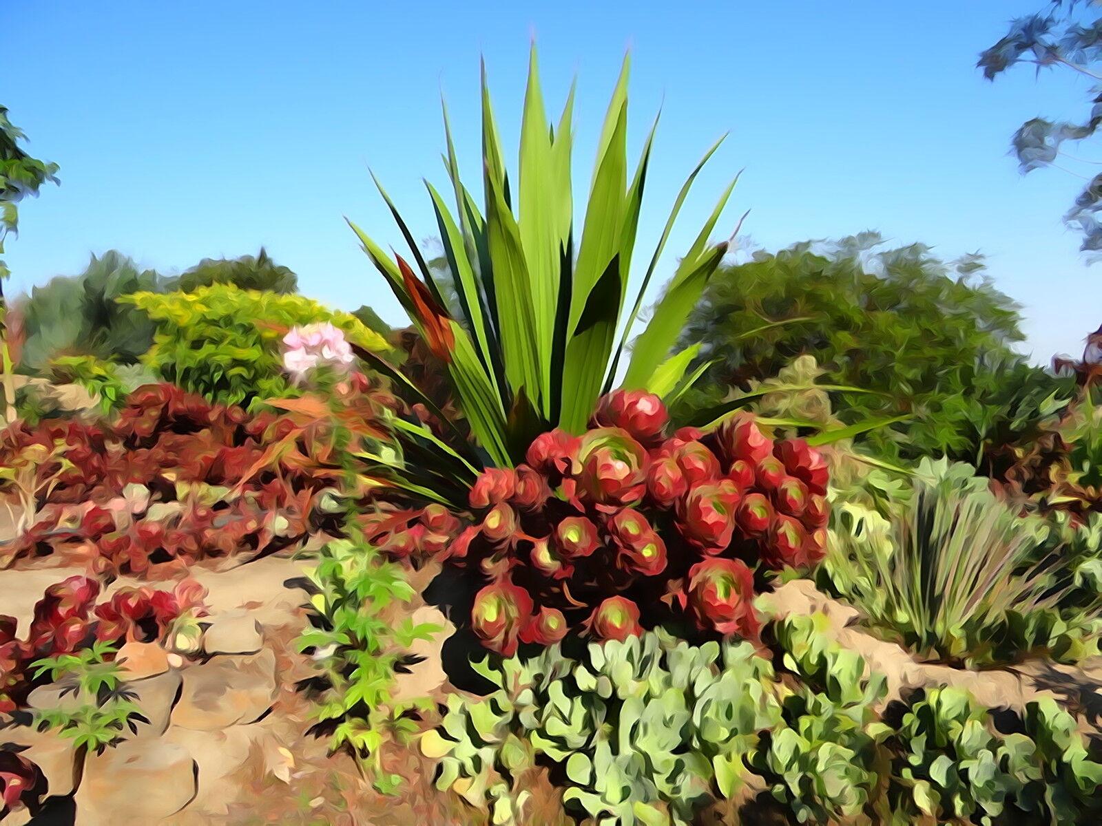 Gardening Australia Succulents Garden Ftempo