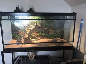 Bearded dragons and accessories