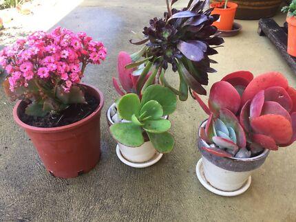 Succulents...   $1 - $10