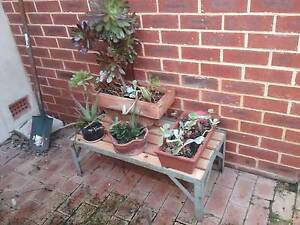 90cm plant stand and plants Wembley Cambridge Area Preview