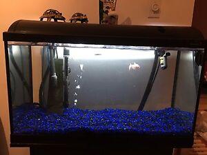 Aquarium poisson 40gal